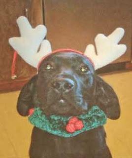 Santa's Reinpup Fluffy