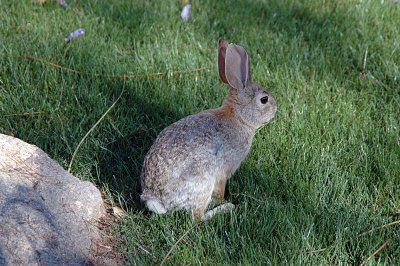 friendly bunnies can be found throughout the gardens