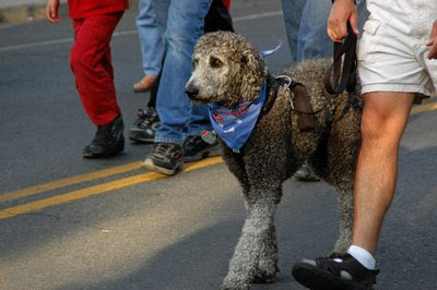 many downtown visitors brought along their well-behaved, furry friends