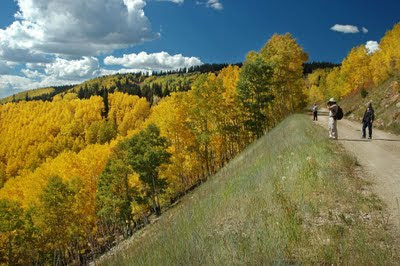 autumn scene on jeep trail outside of Aspen, Colorado
