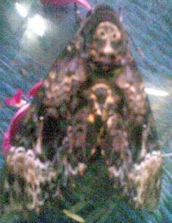 Kupu-kupu yang diyakini warga setempat sebagai kupu-kupu jadi-jadian