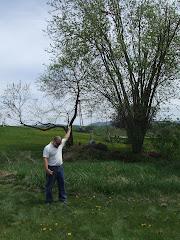 Curts Tree Landing