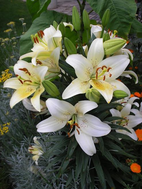 """""""Podem nos tirar as flores, mas nunca a primavera."""" (Eduardo Galeano)"""