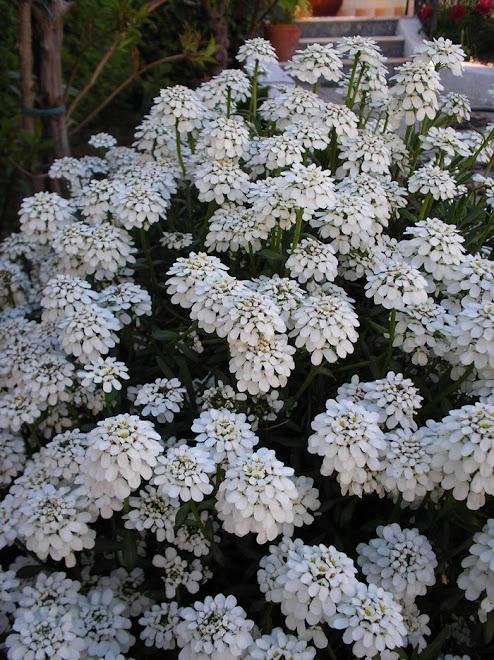 """""""Todos querem o perfume das flores, mas poucos sujam as suas mãos para cultivá-las."""" (Augusto Cury"""