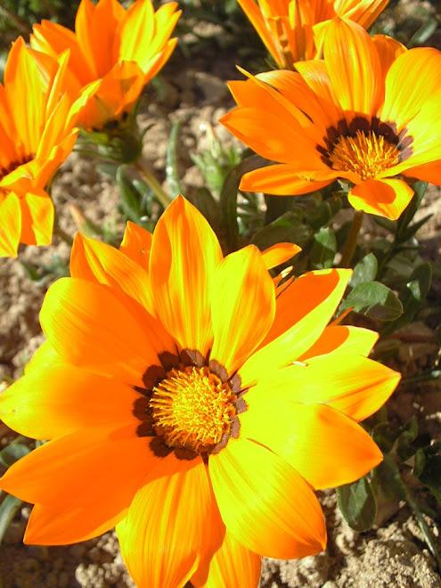 """""""As flores que têm florescimento espetacular fenecem rapidamente."""""""