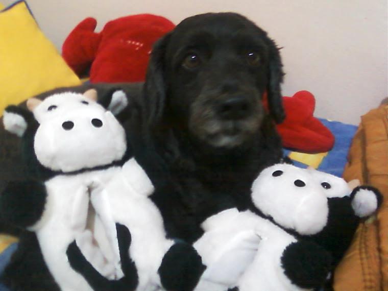 Família Canina