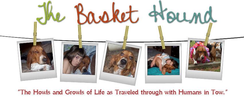 The Basket Hound