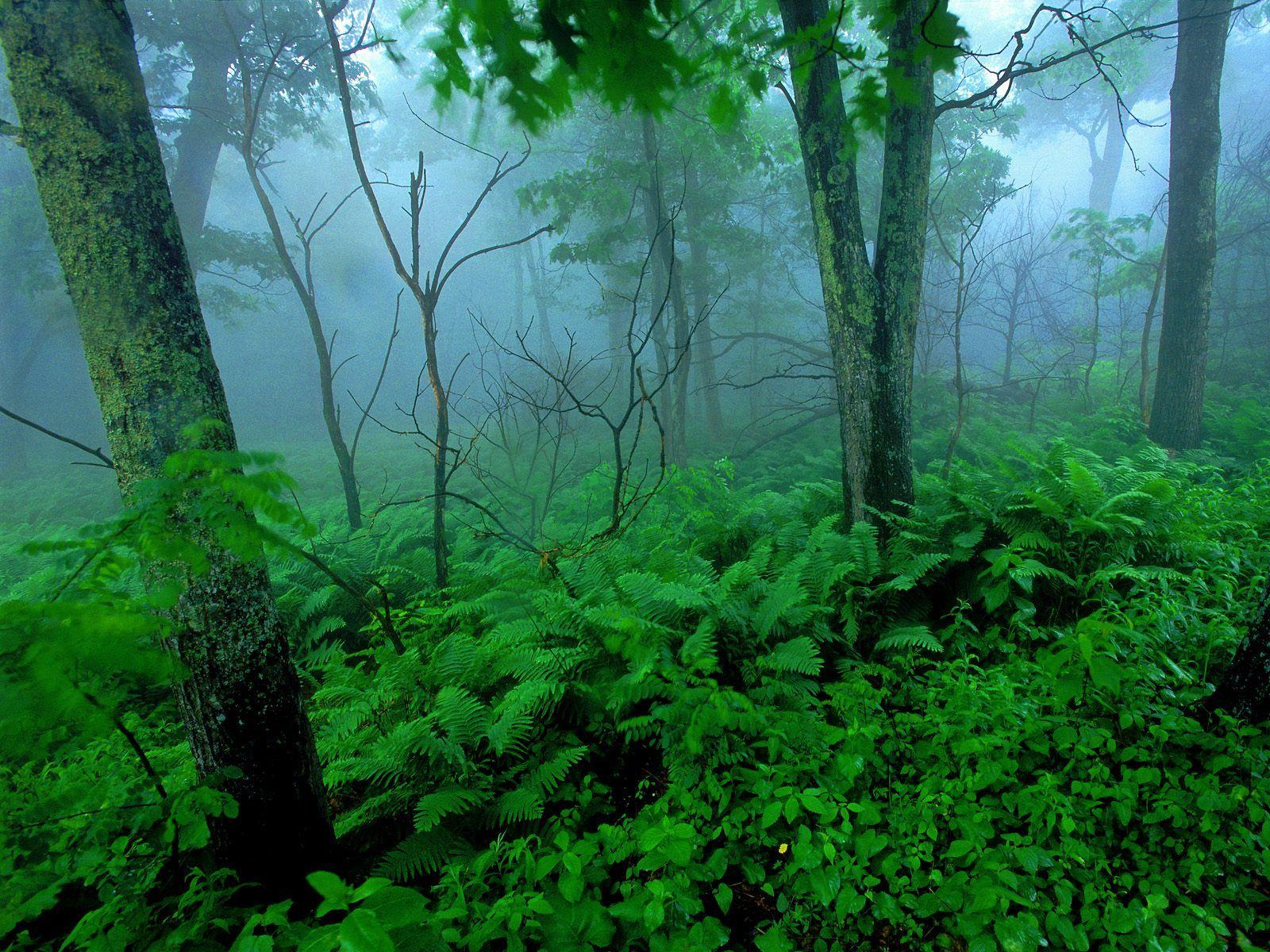 http://1.bp.blogspot.com/_6UIYDGZaA9A/TT00ZPokU_I/AAAAAAAAAPY/5OATCgodcmQ/s1600/Forest+Mist%252C+Shenandoah+National+Park%252C+Virginia.jpg
