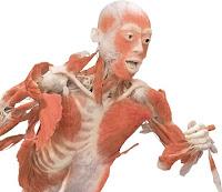Corpo Humano, Piadas, Imagens Engraçadas, Inutilidade,  Textos Engraçados, Diversão,
