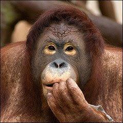 La extinción de especies, más grave de lo que parece...