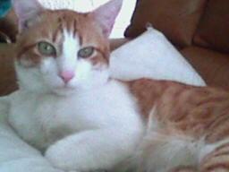 Este es mi gato, Kahlo