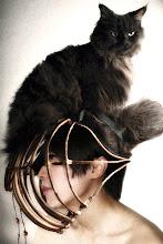 Cat's-Paw