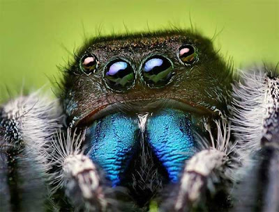 Fashion Colleges on Fashion Schools  Cute Little Jumping Spiders