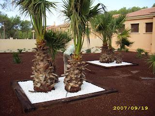 Blog de los aficionados a la jardineria muestras de for Bolsa de piedra para jardin