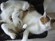 onze katten
