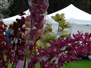 Hawaiian Orchids On Hawaii, The Orchid Island