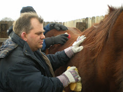 Brushing the horses