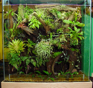 The Online Gardening Guide Building A Plant Terrarium