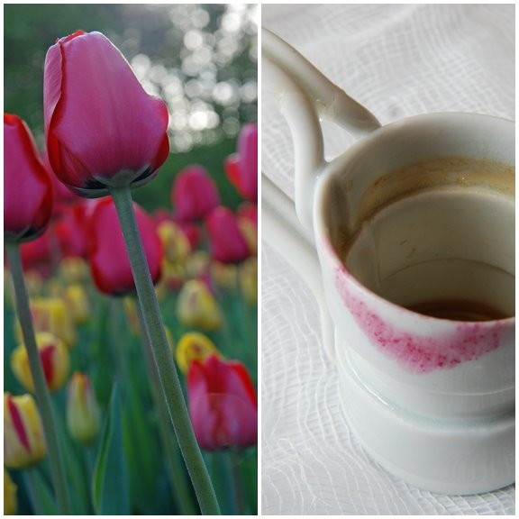 Tulip Festival, Ottawa &amp; My Favorite Espresso Cup