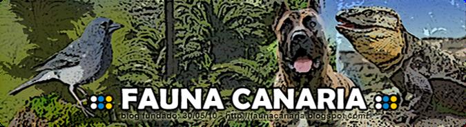 ::: FAUNA CANARIA | ENTRA A NUESTRO MUNDO :::