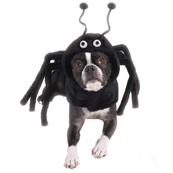 Buscador De Disfraces Disfraces Para Perros