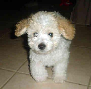 It just like my teddy bear. =3=