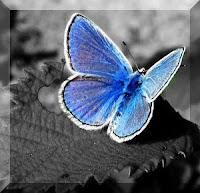 Uç kelebek uç !