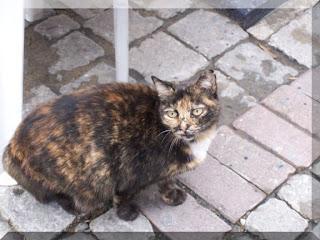 Ortaköy'ün yaramaz kedisi