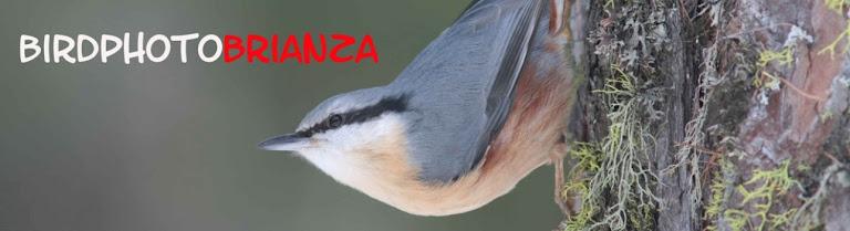 birdphotobrianza
