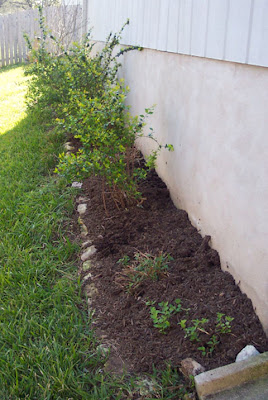 DivasoftheDirt, after back border