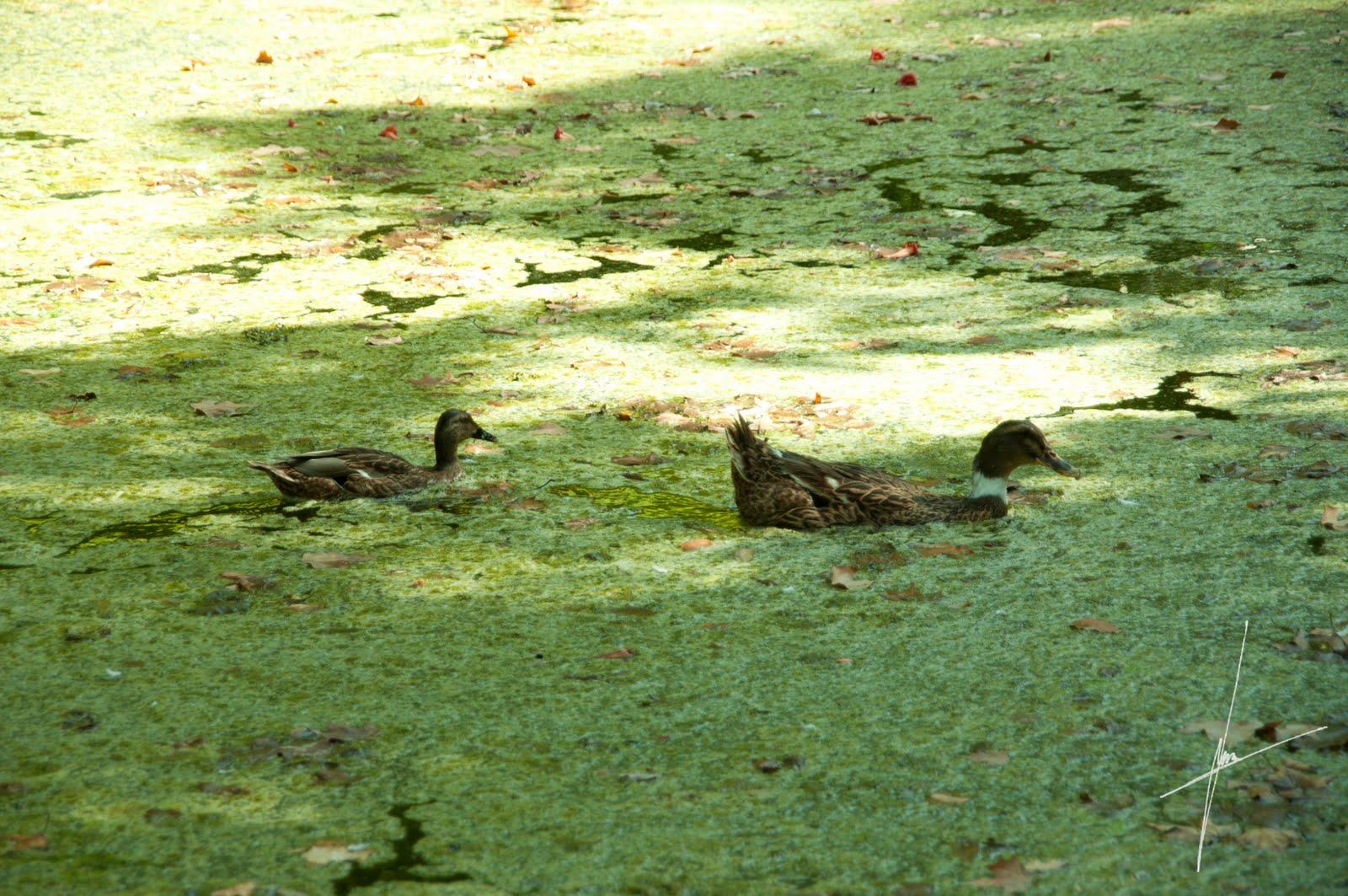 Los rincones de mi sevilla los patitos en el agua Villa jardin donde queda