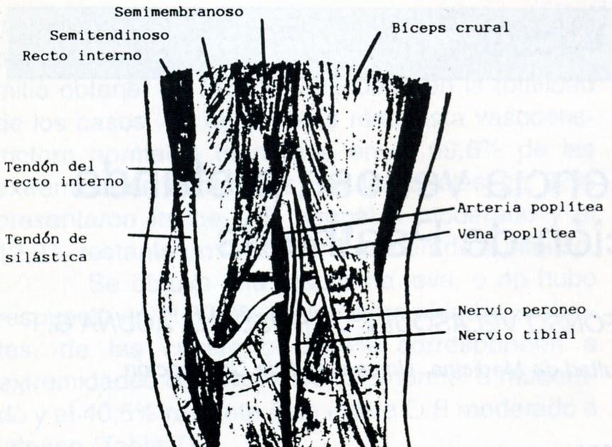 La tromboflebitis de las extremidades inferiores el tratamiento después de la operación