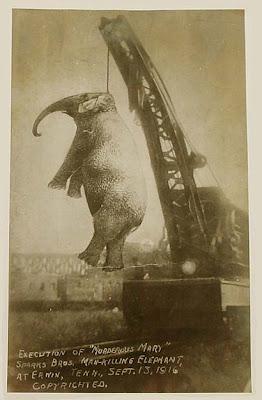murderous mary elephant