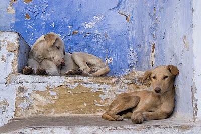 hunter s thompson napalm dog