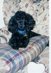My dog, Max