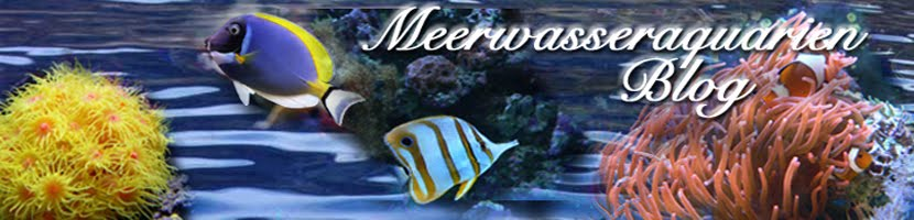 Meerwasseraquarien Blog