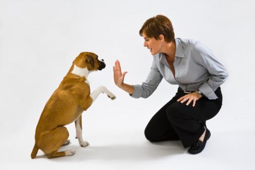 Dog2BTechnique.jpg