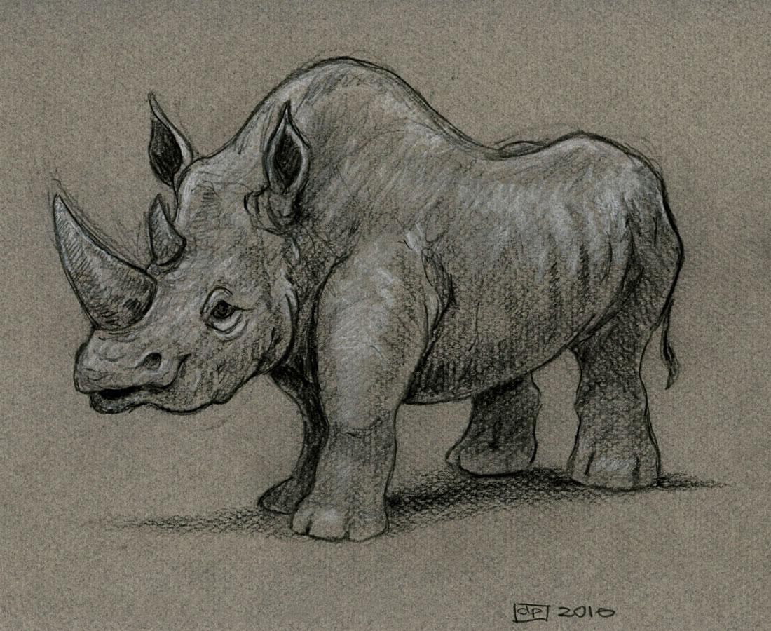 Les dessins de daniel croquis d 39 un rhinoc ros sketch of - Rhinoceros dessin ...
