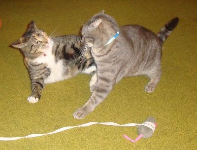 Tail & Snuff
