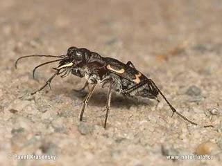 serangga, mematikan, serangga pembunuh, insect, insting pembunuh