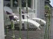 vår altan sommar
