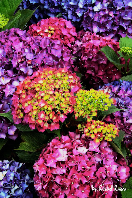 Flores de Galicia