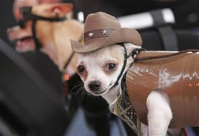 CowboyDogManila.jpg