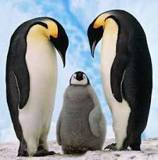 El Pingüino Emperador en peligro de extinción.