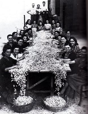 ostra 1942-sbozzolatura