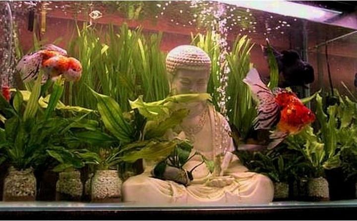 Aquarium design buddha buddha aquarium statue 2017 for Nourriture poisson rouge voile de chine
