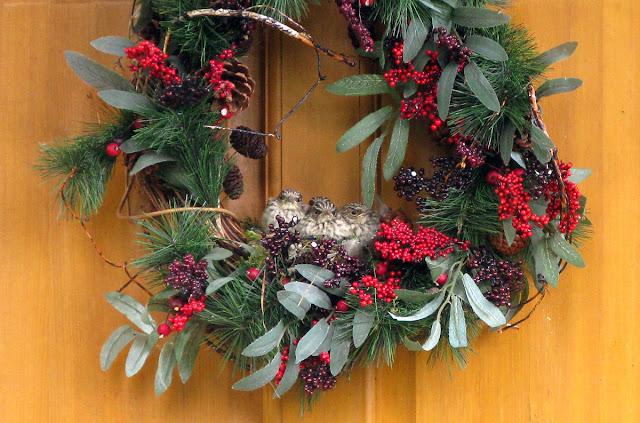 Christmas wreath on door with bird's nest in it.