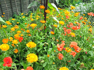 Pot marigolds and red poppies.