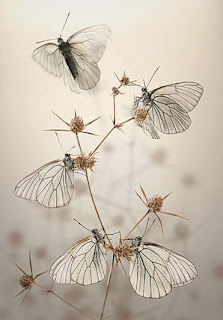 morning_butterflies_by_BlepharopsisOT-a sOoL!!
