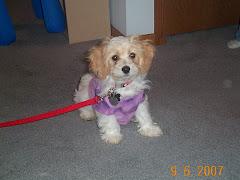 My puppy!